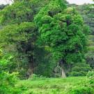 Chilamate Rainforest Eco Retreat